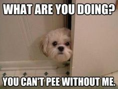 Admit it! Whose pets follow them into the bathroom?