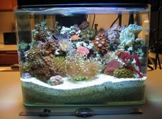 micro reef. soooo cool!
