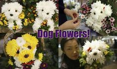 Check out the following pictures of dog flowers. Some are made with REAL flowers. Others were created by placing a real dog behind a painted picture of a flower.Both are fun!