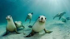 Curious sea lion is ready for his close-up with underwater photographer Beautiful Creatures, Animals Beautiful, Cute Animals, Funny Animals, All Gods Creatures, Sea Creatures, Lion Love, Life Under The Sea, Underwater Photographer