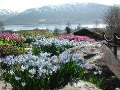 Tromso Botanic garden