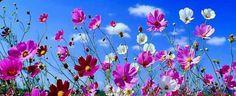 De sublimes fleurs avec leur nom et une très belle musique toute douce!