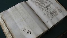 Medieval Cat's Unsubtle Protest Preserved Forever On Centuries-Old Manuscript