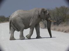 Windhoek - Etosha - 6 Days Self Drive - Rate: From US$1,240.00 per person sharing for 5 Nights