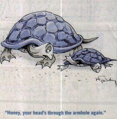 Silly turtles!