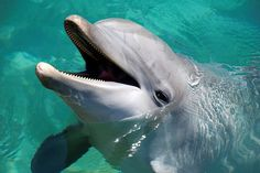 dolphin shows, bermuda   Recent Photos The Commons Getty Collection Galleries World Map App ...