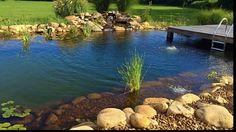 A picture of the first summer with this beautiful recreational pond! The water is crystal clear and so nice! Natural Swimming Pools, One Summer, Aquatic Plants, Ponds, Gin, Homesteading, Jackson, Nursery, Organic