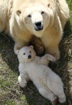 """aisa2: """"Mamma orsa e cuccioletto: tante coccole e amore - Animali - QuotidianoNet - Notizie in tempo reale """""""