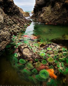 i want to go visit tide pools on the coast this summer:) its been a while and its one of my fave things to do !! evaa