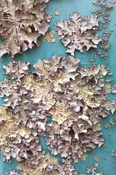 Lichen on paint