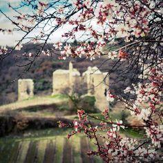 Le château de Larnage au moment de la floraison des abricotiers ; spécialité de ce village ainsi que l'extraction de la Terre Blanche utilisée pour la fabrication des fours à bois Le Panyol depuis 1840.