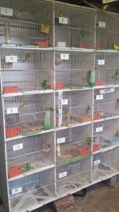 SET OF 6 LARGE BREEDING CAGES IDEAL FOR EUROPEAN FINCHES OR FLIGHT CANARY