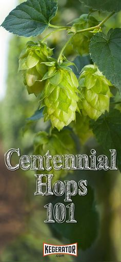 Centennial Hops 101 - History, Plant Information & Brewing Tips