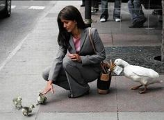 This criminal duck...