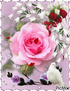 Google+ Flowers Gif, Beautiful Rose Flowers, Beautiful Gif, Beautiful Butterflies, Love Flowers, Beautiful Gardens, Good Morning Gif, Good Morning Greetings, Happy Day Quotes