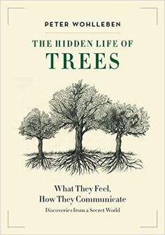 Download ebook The Hidden Life of Trees by Peter Wohlleben pdf doc epub  buy pdf ebooks The Hidden Life of Trees [b]download top ebooks The Hidden Life of Trees download torrent ebooks  CLICK HERE TO DOWNLOAD EBOOK The Hidden Life of Trees by Peter Wohlleben: http://download.zaichyk.com/go.php?sid=5&tds-q=The%20Hidden%20Life%20of%20Trees
