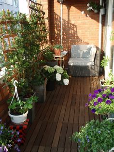 Balcony gardener making excellent use of trellis