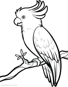 Coloring Cartoon Birds Awesome 40 Beautiful Bird Drawings and Art Works for Your Easy Pencil Drawings, Outline Drawings, Bird Drawings, Art Drawings Sketches, Animal Drawings, Parrot Drawing, Cartoon Birds, Anatomy Drawing, Cockatoo