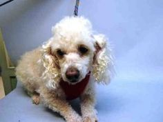 27eed841713 Super Urgent Dogs These animals are either high risk