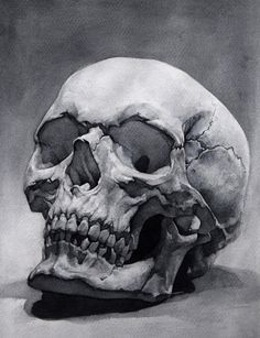 Skull study, me, watercolor, : Art Skull Sketch, Skull Artwork, Skull, Skull Art Drawing, Art Drawings, Drawings, Anatomy Art, Art, Airbrush Art