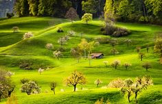 Spring Hills - Baselland, Switzerland this morning www. Spring Hill, Photos Of The Week, Homeland, Landscape Photography, Travel Photography, Switzerland, Vineyard, Golf Courses, Tourism