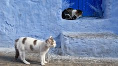 Your cat may get anxious and aggressive if another stray cat is wandering outside. This cats scent which your kitty can notice even inside your house makes your cat feel like their home is in danger. Kittens Cutest, Cats And Kittens, Cute Cats, Funny Cats, Cat Pictures For Kids, Funny Cat Pictures, Animals And Pets, Baby Animals, Cute Animals