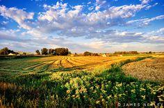 fields south of Idaho Falls, Idaho