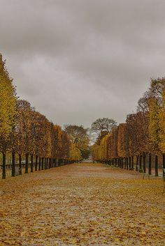 Jardin des Tuileries, Paris. I have always been bewitched with the beauty of Paris. I can't wait to visit some day!