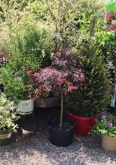 Amazing Gardeneru0027s Supply Garden Centers In Burlington And Williston, Vermont.