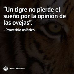 A tiger doesn't lose sleep over the opinion of sheep. Asian proverb lavozdelmuronet#tigre #ovejas #opinion #proverbios #remordimiento #asia #reflexion #tiger #tigers #sheep #proverbs #asian #refection #regret #tips #octubre #october #picoftheday #instagood #instamoment #instapic #bestoftheday #Instadaily #instacool #lavozdelmuro