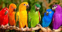 """OK guys, lets see....We've got red, orange, yellow, green, blue, indigo and violet!!!!  Hang on where's that indigo sloped off to again? He's never here when he's needed....and now that's given me a headache...who's got the parrots eat em all?"" lol"