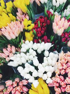 I love tulips... Such beautiful forms