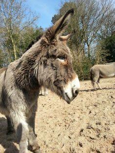 Lob - Donkey Sanctaury Birmingham