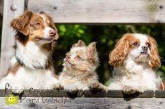 Hundefotografie, fotoshooting dogs
