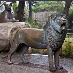 Jungle lion bronze sculpture