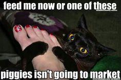 Funny cats - piggies