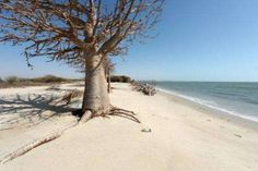 A tree and and tree debris are pictured on May 7, 2013 on the beach of the village of Doun Baba Dieye, northern Senegal