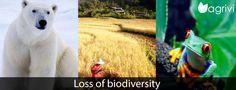 #Loss of #biodiversity   Agrivi
