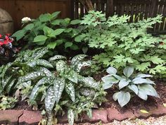 redesign: lungwort with bleeding heard and hostas....love it