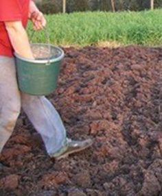 Moestuinkalender maart. De grond in de moestuin moet regelmatig gevoed worden. Dit moet gebeuren in de maximaal 40 cm diepe, vruchtbare, bovenste grondlaag waarin het wortelleven zich afspeelt. De vruchtbare laag moet het liefst rul en kruimelig zijn, waardoor de lucht en het water in de grond kunnen doordringen. Bekijk meer tips in onze moestuinkalender van maart #moestuin #kweken #moestuinkalender Fruit Garden, Edible Garden, Vegetable Garden, Garden Plants, Growing Veggies, Growing Herbs, Coffee With Friends, Urban Farming, Compost
