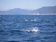 #Pesca sportiva #elfishing #fishing