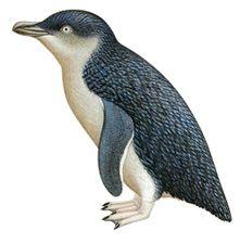 little penguin - Google Search