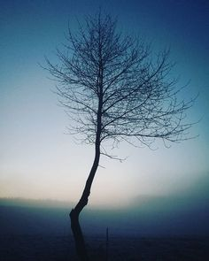 #silvestr #home #psycho #horror #blairwitch #czech #nature #walk #strabenice #newphone #huaweip9