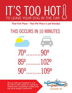It's too hot to leave your dog in the car! Pets can suffer from heatstroke or even die if left in a HOT parked car. Leaving the windows down and parking in shaded areas may not be enough to prevent this.