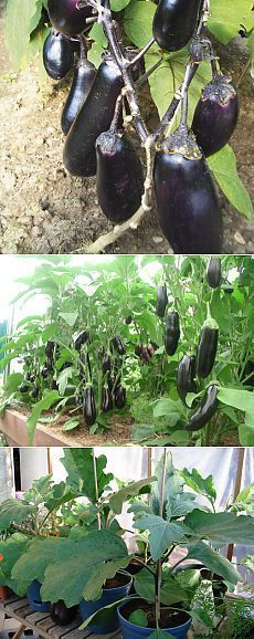Vegetable Gardening Tips At Your Backyard - Urban Gardening Vegetable Garden, Garden Plants, Organic Gardening, Gardening Tips, The Constant Gardener, Garden Boxes, Farm Gardens, Edible Garden, Growing Vegetables