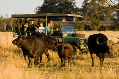 Plettenberg Bay Game Reserve Garden Route coastline Game drive bush wedding horse safari for family holiday