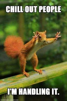 38 Super Funny Animal Pics