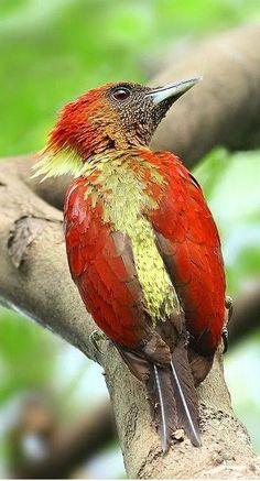 μεγάλο πουλί κοκκινομάλλααγόρια και μαμάδες σεξ
