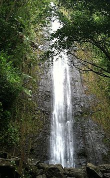 Manoa Falls - Wikipedia, the free encyclopedia