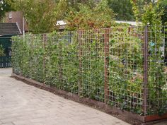 Thinking about fences serves garden and privacy